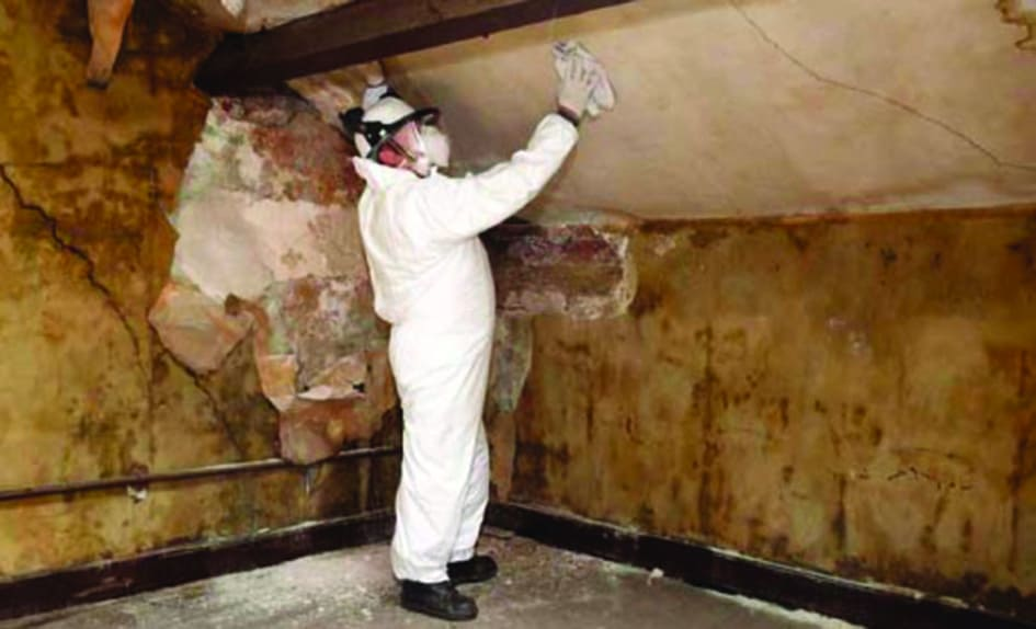 Mould Cleaning and remediation (2)